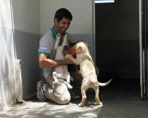 Incan Gobet cachorro